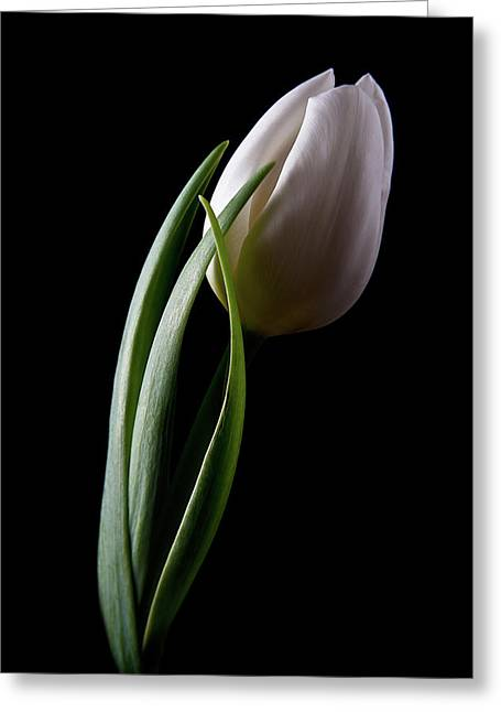 Tulips IIi Greeting Card by Tom Mc Nemar