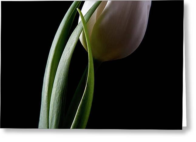 Tulips III Greeting Card by Tom Mc Nemar