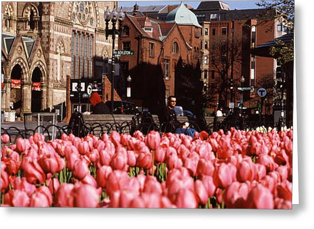 Garden Scene Photographs Greeting Cards - Tulips In A Garden With Old South Greeting Card by Panoramic Images