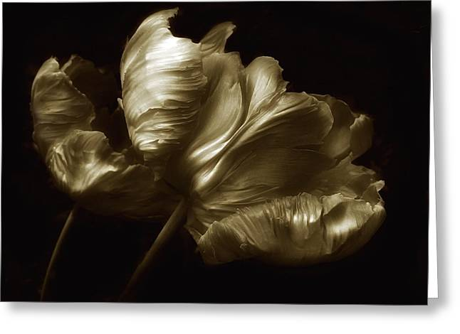 Tulips In Sepia Greeting Card by Jessica Jenney