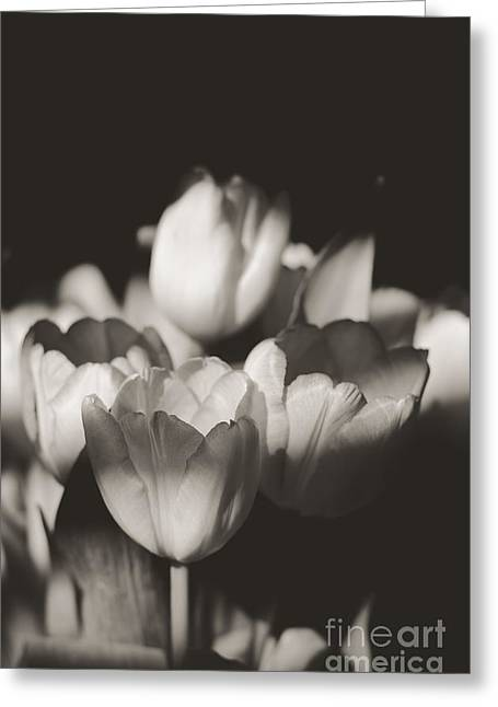 Grey Scale Greeting Cards - Tulips in the Light I Greeting Card by Chris Ann Wiggins