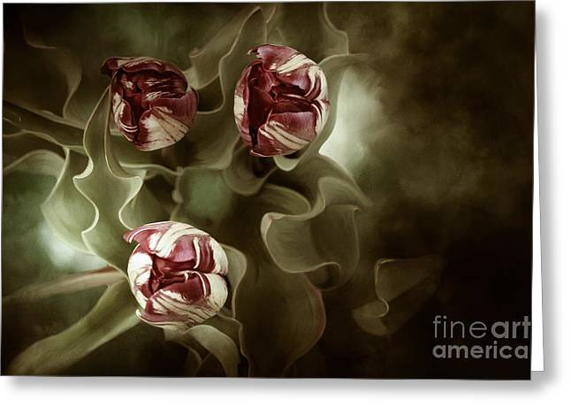 Green Burgandy Greeting Cards - Tulips in the Mist  Greeting Card by Reflective Moment Photography And Digital Art Images
