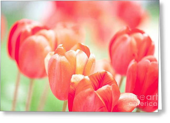 Kaypickens.com Photographs Greeting Cards - Tulips in the Sun Greeting Card by Kay Pickens