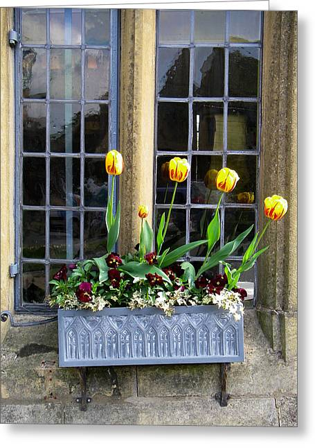Geobob Greeting Cards - Tulips in Window box Broadway Village Cotswold District England Greeting Card by Robert Ford