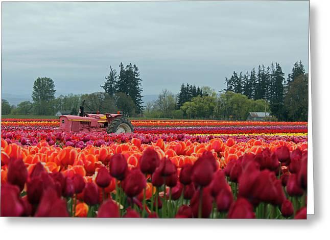 Tulip Tree Digital Art Greeting Cards - Tulips  Greeting Card by Kami McKeon