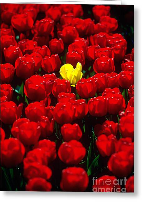 Farm Stand Greeting Cards - Tulips Greeting Card by Kees Van Den Berg