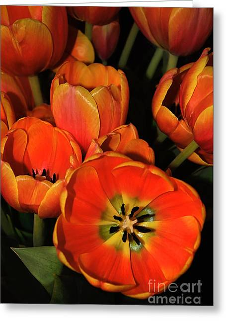 Tulips Of Fire Greeting Card by Kaye Menner