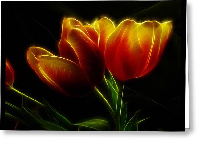 Digipho333 Studio Greeting Cards - Tulips of Light Greeting Card by Shannon Story