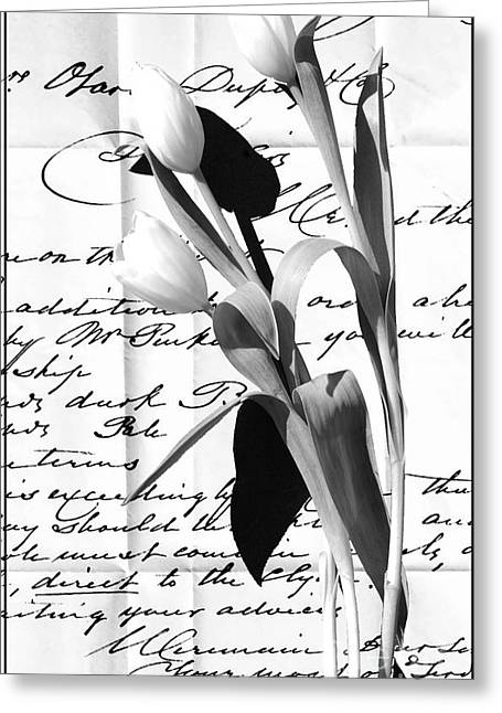 Love Letter Greeting Cards - Tulips on Old Love Letter Typography Art Greeting Card by Anahi DeCanio - ArtyZen Studios
