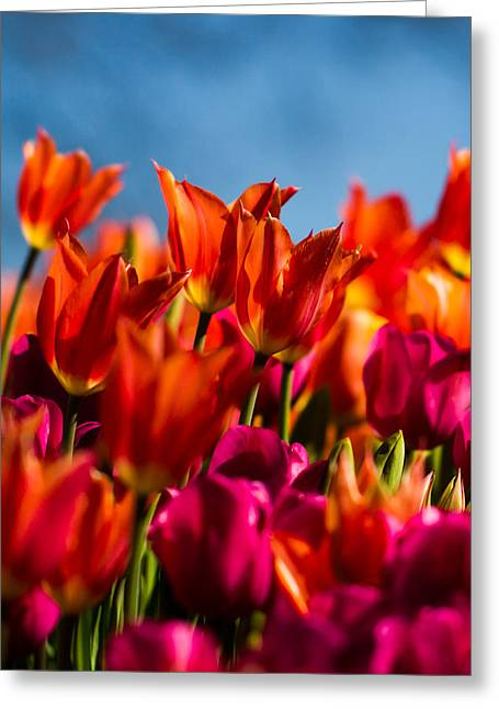 Cheekwood Greeting Cards - Tulips Greeting Card by Paula Ponath