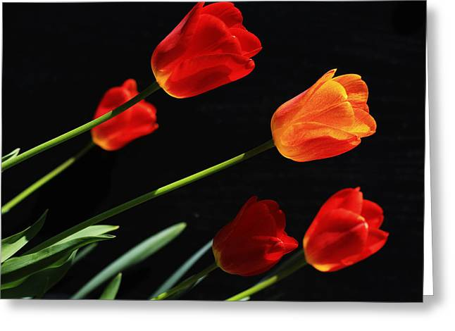 Fluorescent Yellow Greeting Cards - Tulips Greeting Card by Shelley Neff