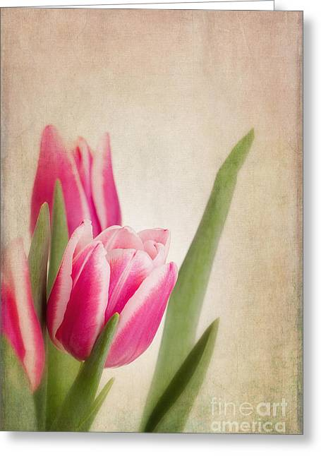 Grungy Greeting Cards - Tulips vintage Greeting Card by Jane Rix
