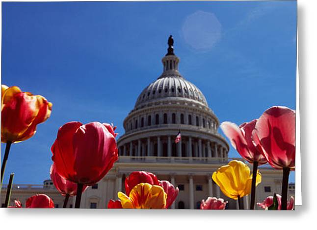 Domes Greeting Cards - Tulips With A Government Building Greeting Card by Panoramic Images