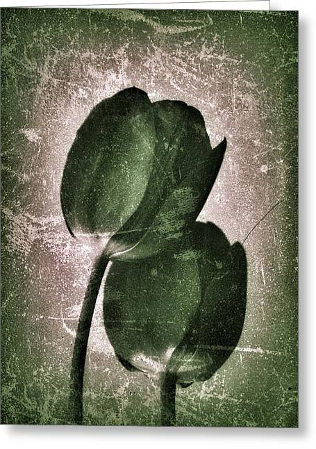 Diane Reed Greeting Cards - Tulips With Texture Greeting Card by Diane Reed