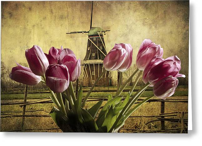Randy Greeting Cards - Tulips with the DeZwaan Windmill in Holland Michigan No. 105 Greeting Card by Randall Nyhof