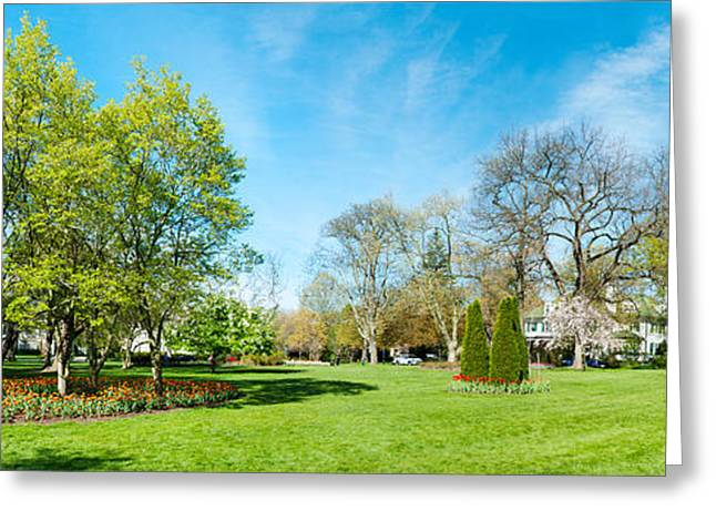 Garden Scene Greeting Cards - Tulips With Trees At Sherwood Gardens Greeting Card by Panoramic Images