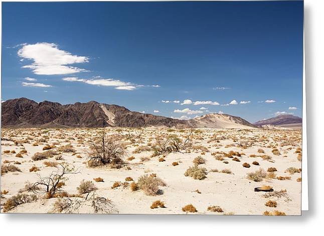 Tumbleweed Growing In The Mojave Desert Greeting Card by Ashley Cooper