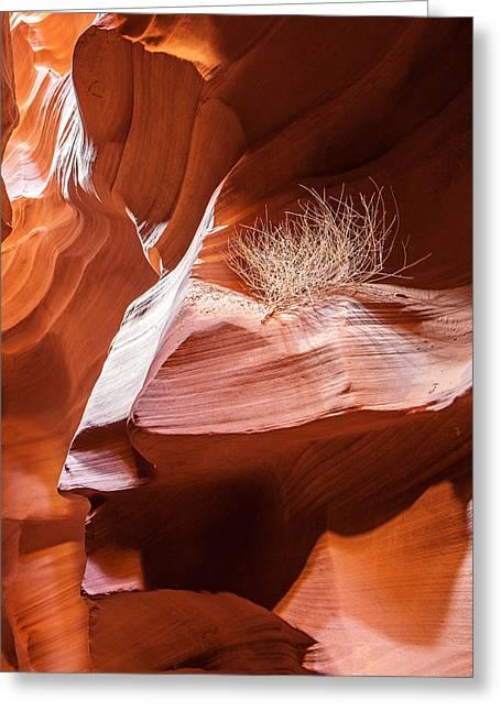 Travel Arizona Greeting Cards - Tumbleweed in Antelope Canyon Greeting Card by Susan  Schmitz