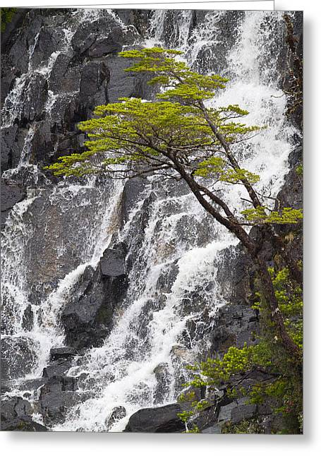 Green Chile Greeting Cards - Tumbling Falls in Chile Greeting Card by Tim Grams