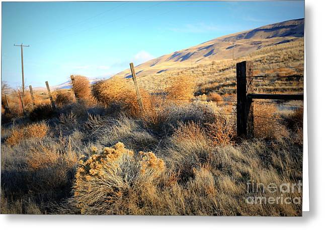 Yakima Valley Greeting Cards - Tumbling Tumbleweeds Greeting Card by Carol Groenen