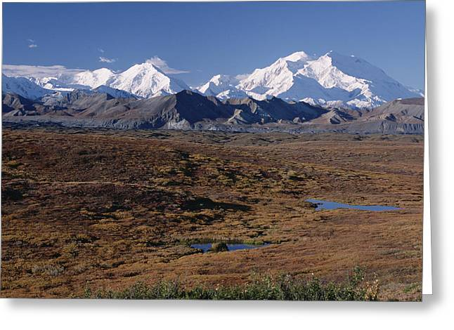 Photos Of Autumn Greeting Cards - Tundra And Mt Denali In Autumn Denali Np Greeting Card by Michael Quinton