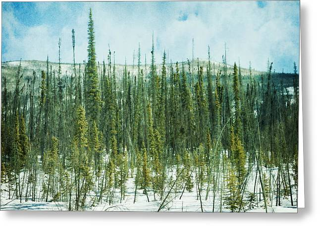 Winter Scene Photographs Greeting Cards - Tundra Forest Greeting Card by Priska Wettstein
