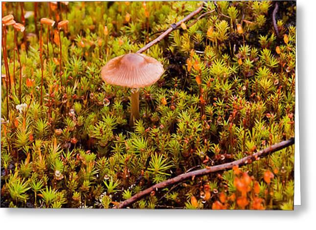 Alaska Mushroom Greeting Cards - Tundra Mushroom Greeting Card by Wayne Vedvig