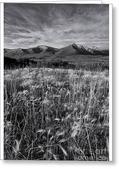 Tundra Greeting Cards - Tundra Summer Greeting Card by Priska Wettstein
