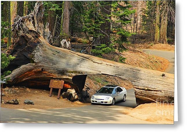 Drive Through Greeting Cards - Tunnel Log Sequoia National Park  6621 Greeting Card by Jack Schultz