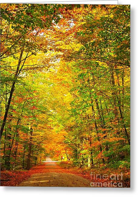 Fall Landscape Greeting Cards - Tunnel of Leaves Greeting Card by Terri Gostola