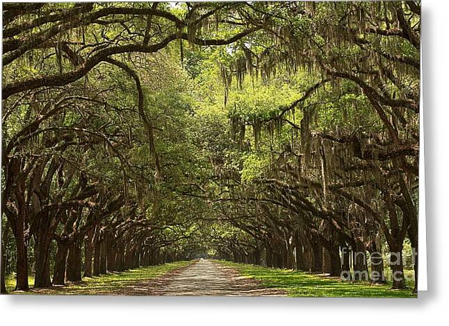 Branch Avenue Greeting Cards - Tunnel Of The Oaks Greeting Card by Adam Jewell
