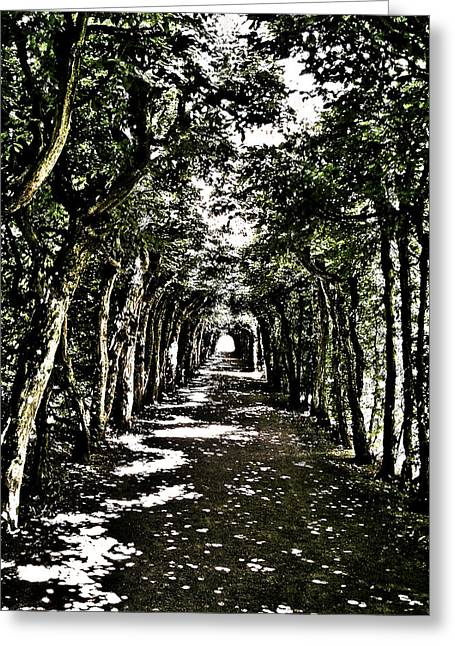 Sonne Greeting Cards - Tunnel of Trees ... Greeting Card by Juergen Weiss