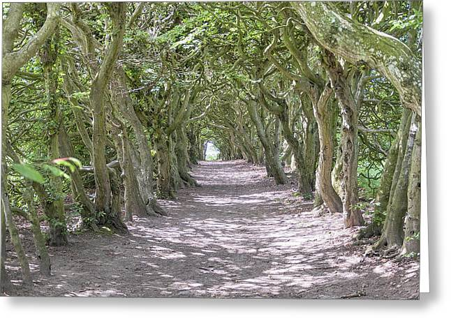 Interlaced Greeting Cards - Tunnel of Trees Greeting Card by Antony McAulay