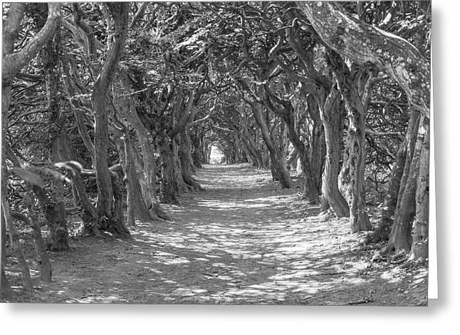 Interlaced Greeting Cards - Tunnel of Trees Mono Greeting Card by Antony McAulay