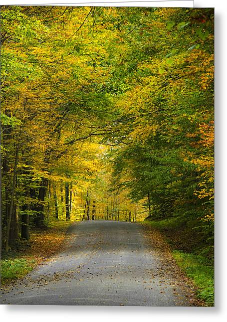 Line Of Trees Greeting Cards - Tunnel Of Trees Rural Landscape Greeting Card by Christina Rollo