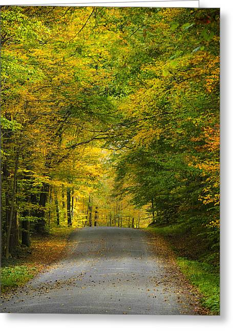Tunnel Of Trees Rural Landscape Greeting Card by Christina Rollo