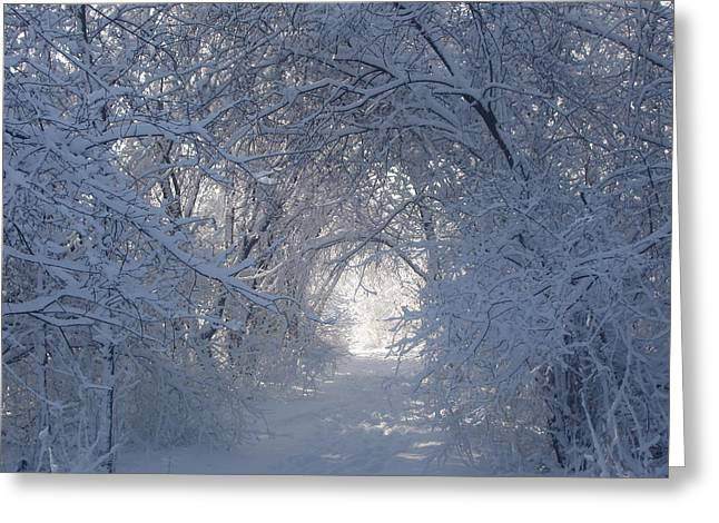 Tunnel Of Trees Greeting Card by Teresa Schomig