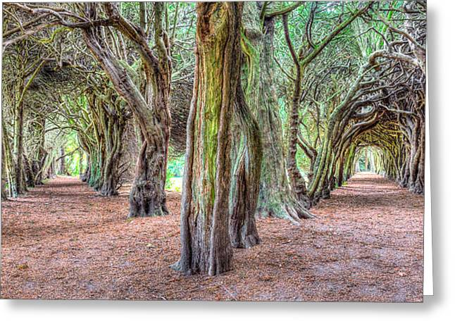 Tunnels Of The Intertwined Greeting Card by Semmick Photo