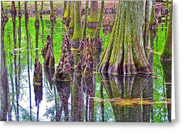 Natchez Trace Parkway Greeting Cards - Tupelo/Cypress Swamp Reflection at Mile 122 of Natchez Trace Parkway-Mississippi Greeting Card by Ruth Hager