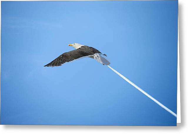 Flying Animal Greeting Cards - Turbo seagull Greeting Card by Michael Mogensen
