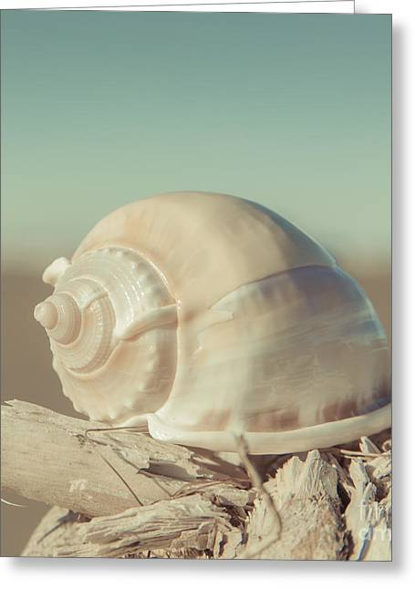 Beach Photographs Greeting Cards - Turbo Seashell Greeting Card by Lucid Mood