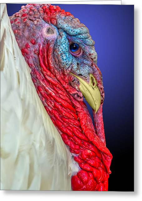 Meleagris Gallopavo Greeting Cards - Turkey 2 Greeting Card by Brian Stevens