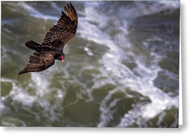 Turkey Buzzard Greeting Cards - Turkey Buzzard Flying Greeting Card by Belinda Greb