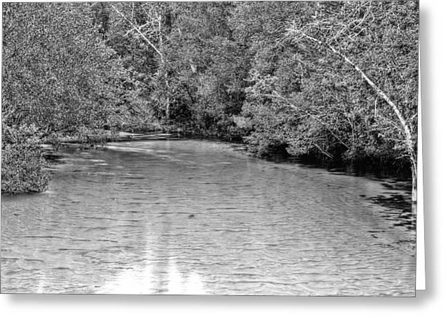 Turkey Creek BW Greeting Card by JC Findley