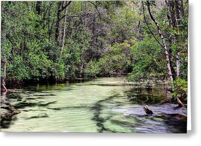 Florida Panhandle Greeting Cards - Turkey Creek Niceville Greeting Card by JC Findley