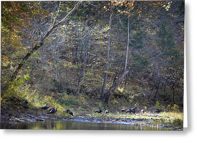 Boxley Valley Greeting Cards - Turkey Crossing at Big Hollow Greeting Card by Michael Dougherty