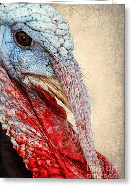 Gamebird Greeting Cards - Turkey Greeting Card by Darren Fisher