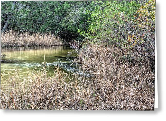 Florida Panhandle Greeting Cards - Turkey Hen Creek Greeting Card by JC Findley
