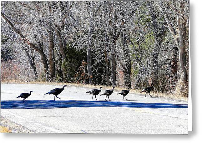 Meleagris Gallopavo Greeting Cards - Turkey Trot Greeting Card by Cindy Croal