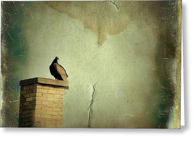 Turkey Buzzard Greeting Cards - Turkey Vulture Greeting Card by Gothicolors Donna Snyder